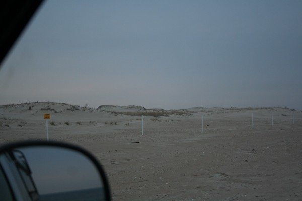 The owl is one of the small dark specks on the high dune on the left, the trap is set on the dune to the right