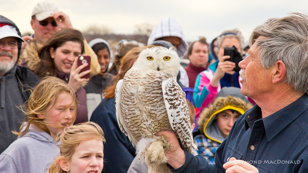 Norman Smith talks snowy owl biology with a rapt crowd at Plum Island National Wildlife Refuge, waiting for Century's release. (©Raymond MacDonald)