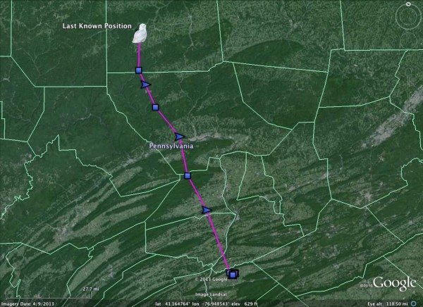 Wiconisco's track FGriday night, flying 94 miles from Dauphin County to Tioga County in Pennsylvania (©Project SNOWstorm and Google Earth)