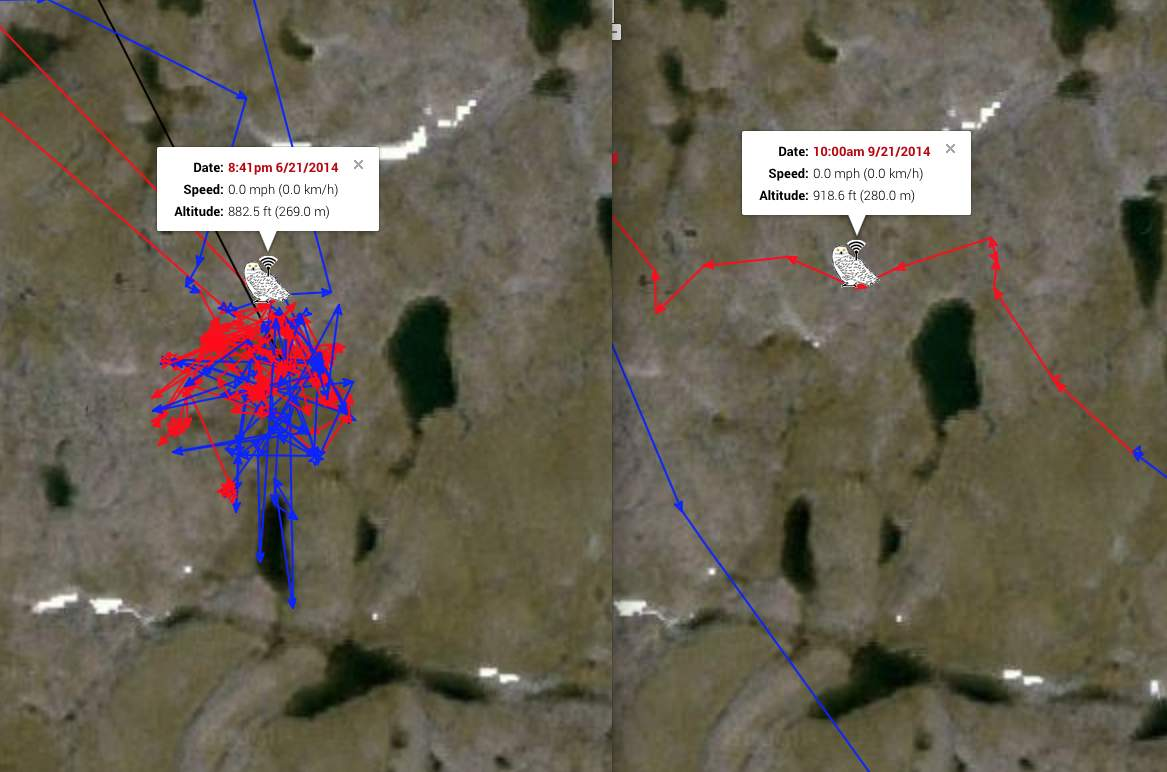 Century's track (left) in June, and Millcreek's in September, both using the same area along the same little tundra pond in northern Quebec. (©Project SNOWstorm and Google Earth)