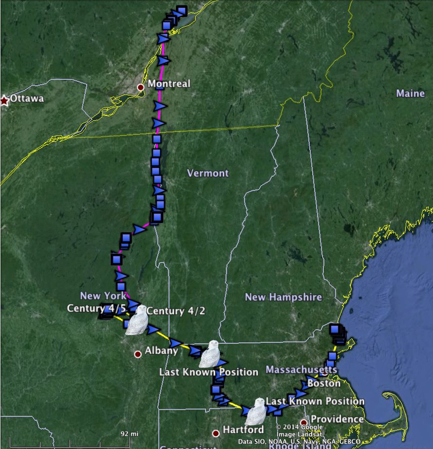 Century's movements last winter (yellow) and her spring migration north (purple). (©Project SNOWstorm and Google Earth)