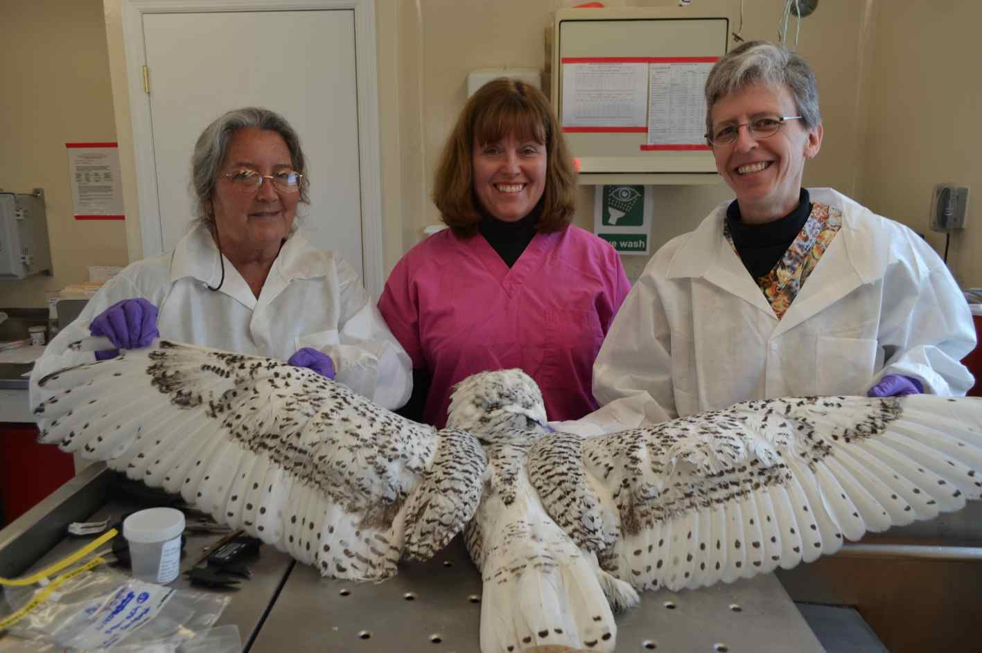 From left, Drs. Cindy Driscoll, Sherrill Davison and Erica Miller prepare to perform a necropsy on a snowy owl found dead last winter. Such painstaking exams, along with sophisticated lab work, are revealing the toxins and other dangers snowy owls face.