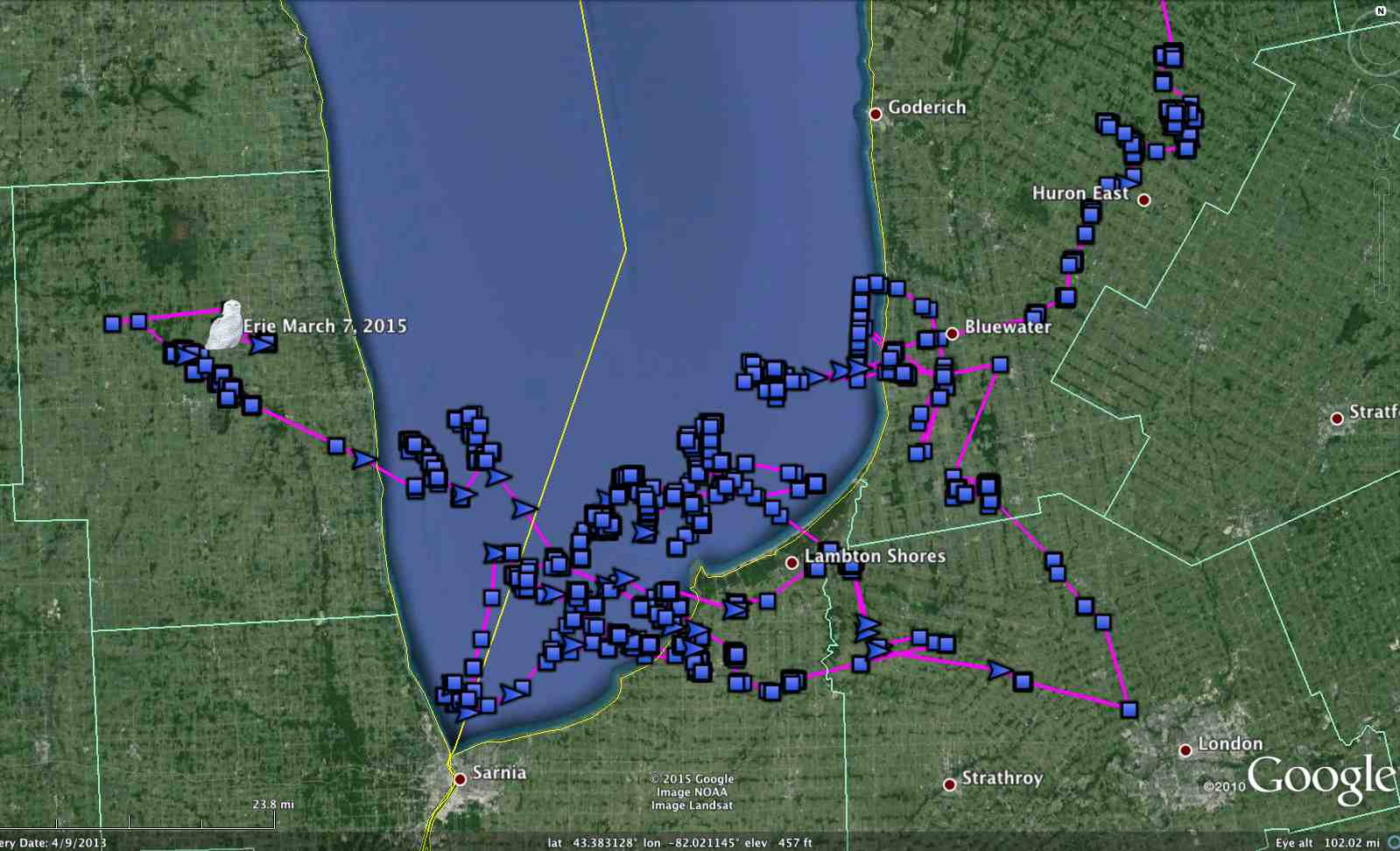Erie's movements since late January, when he arrived in southwestern Ontario, then moved out onto frozen Lake Huron. (©Project SNOWstorm and Google Earth)