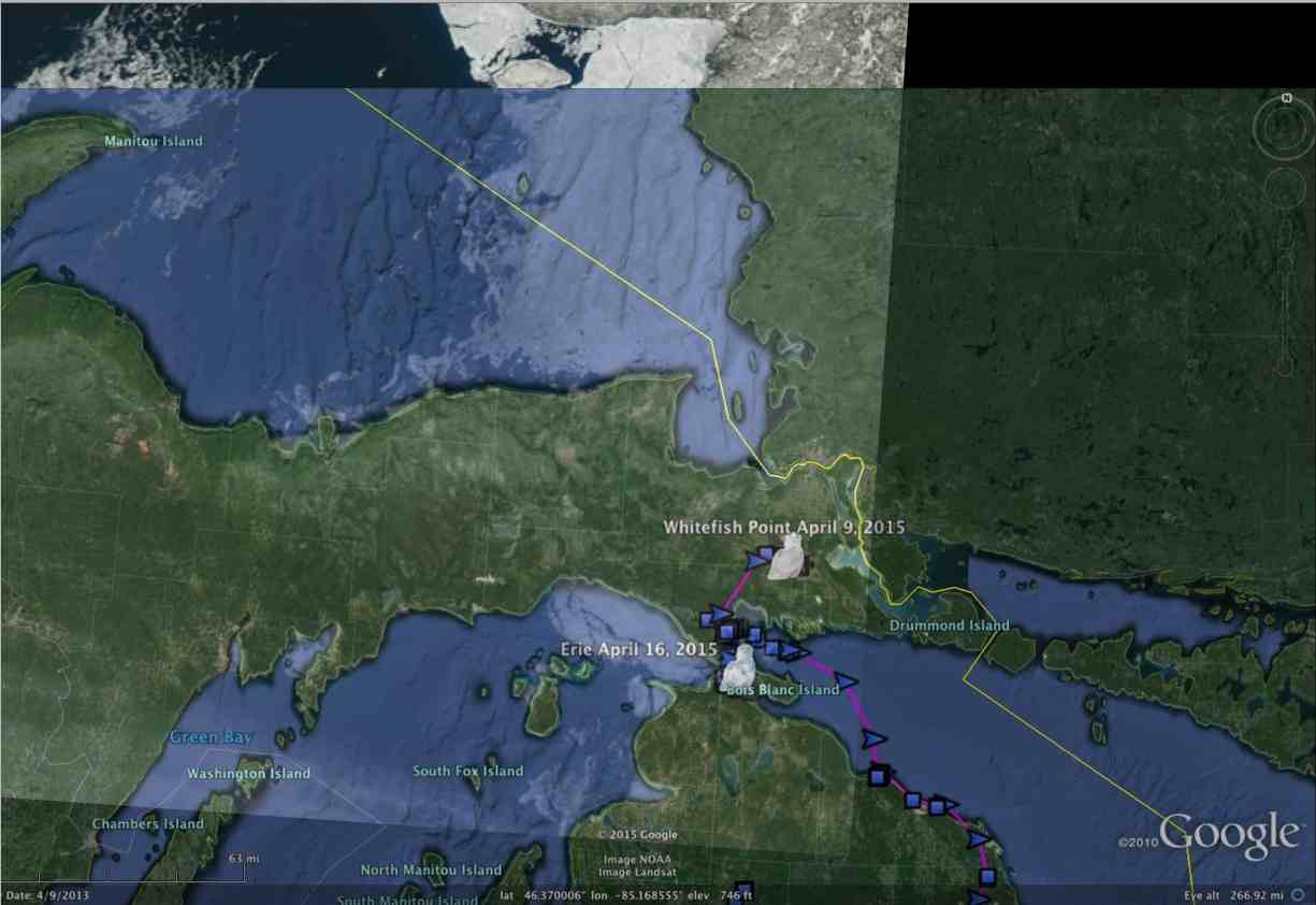 Ice cover April 15 on lakes Michigan and Superior - almost gone on the former, but still an immense area on Superior. Is that where Whitefish Point and Chipppewa are? (©Project SNOWstorm and Google Earth)