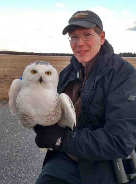 Scott Weidensaul keeps a firm grip on Brunswick, Project SNOWstorm's first tagged owl in Maine. (©Chris DeSorbo)