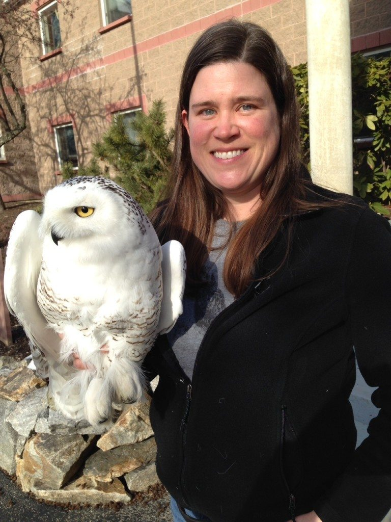 Lauren Gilpatrick of the Biodiversity Research Institute with Brunswick, Project SNOWstorm's first Maine owl. (©Scott Weidensaul)