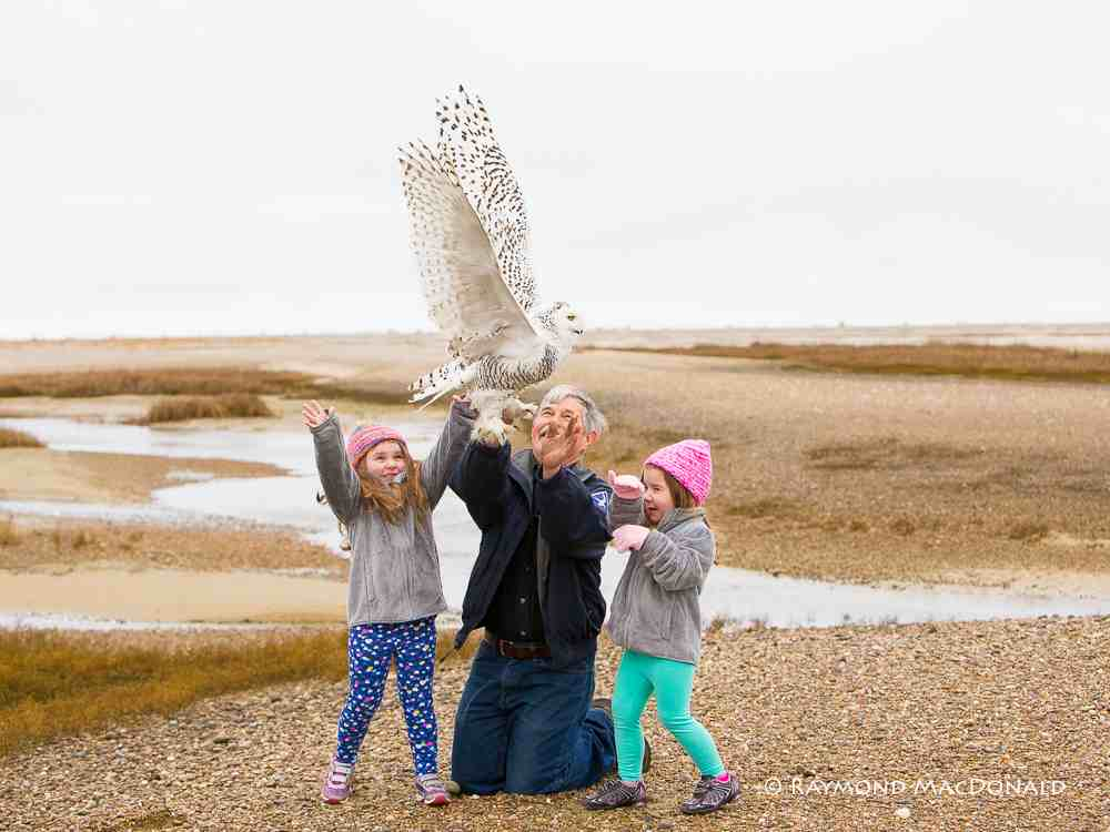 Norman Smith -- with help from his granddaughters Alexa and Carmella -- release Wampatuck, the latest Project SNOWstorm owl. (©Ray McDonald)