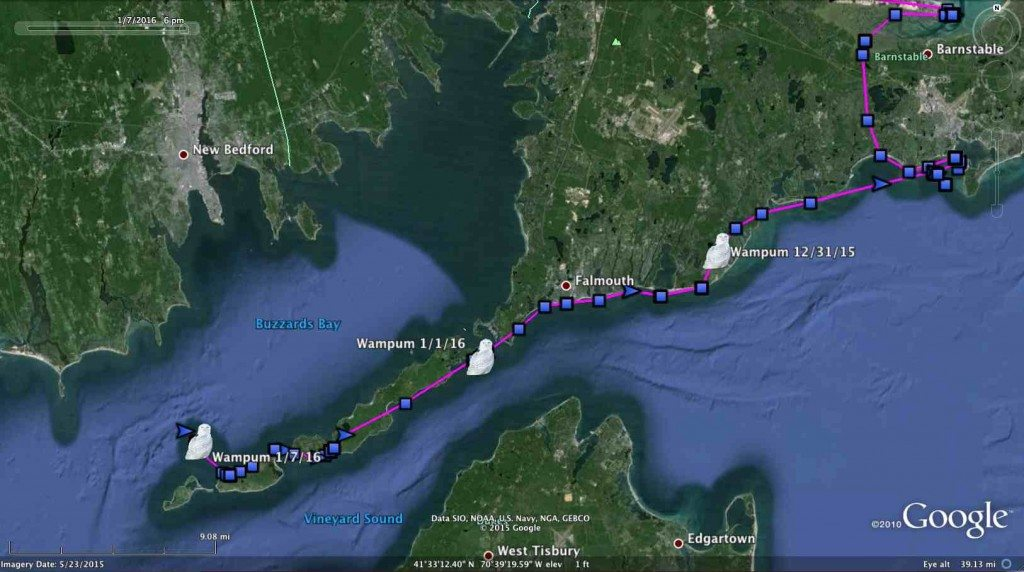 Wampum made a beeline down the length of the Elizabeth Islands in the days following her relocation from Logan Airport. (©Project SNOWstorm and Google Earth)
