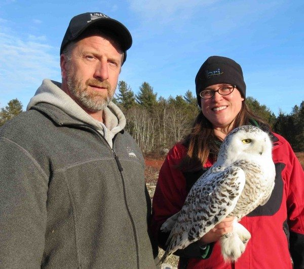 Matt Ewing from USDA Wildlife Services and Lauren Gilpatrick from BRI with Casco, just before her release. (©BRI)