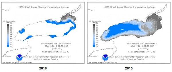 Last winter at this time, almost half of Lake Ontario was under ice. This winter there's far less -- but enough for some of our tagged owls to start using it. (Great Lakes Environmental Research Laboratory National Ice Center)