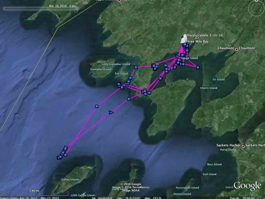 Ride the ice while the riding is good -- Hardscrabble moved offshore for a bit this past week, before coming back to Cape Vincent and Three Mile Bay, NY. (©Project SNOWstorm and Google Earth)