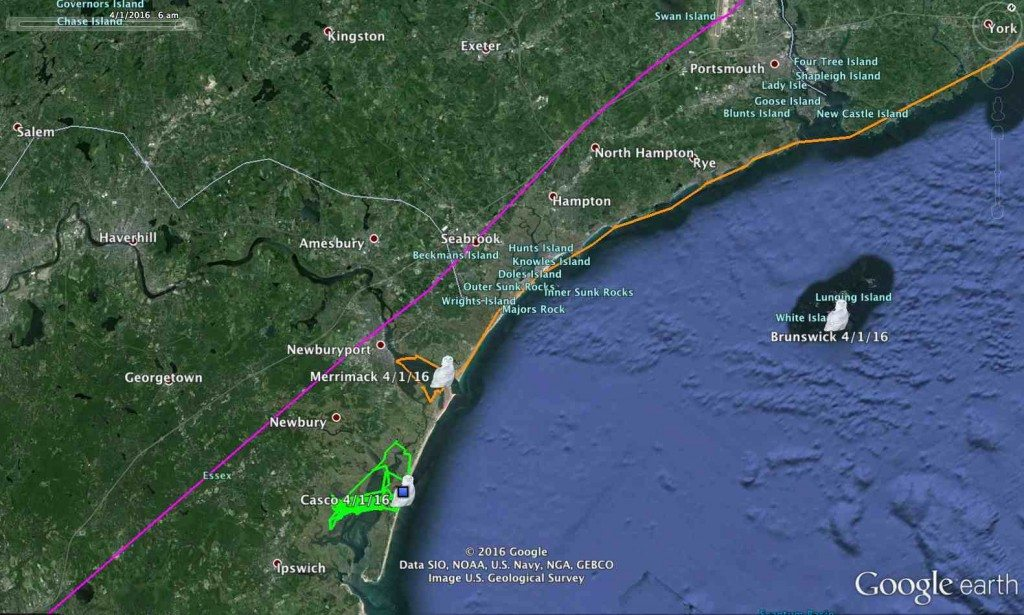 Casco and Merrimack are just a few miles from one another, Salisbury's track (purple) headed north, and Brunswick is still in the Isle of Shoals. (©Project SNOWstorm and Google Earth)